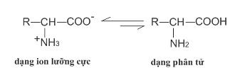 Cấu tạo phân tử của amino axit